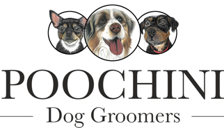 Poochini Dog Grooming Salon in Chester