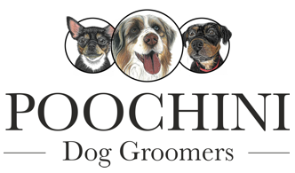 Poochini Dog Groomers in Chester